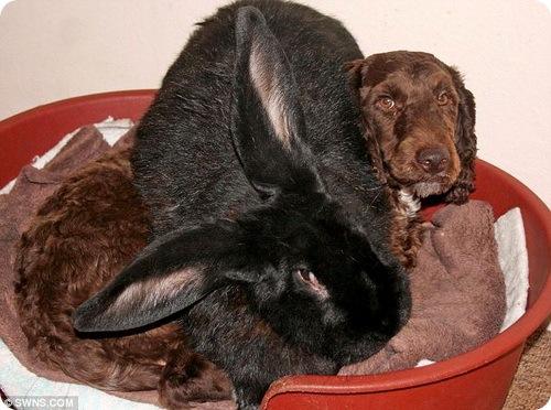 Занимательные истории о животных ,фото... 0920960